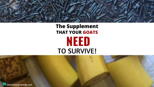 Copper Bolus for Goats – The EASY Way!
