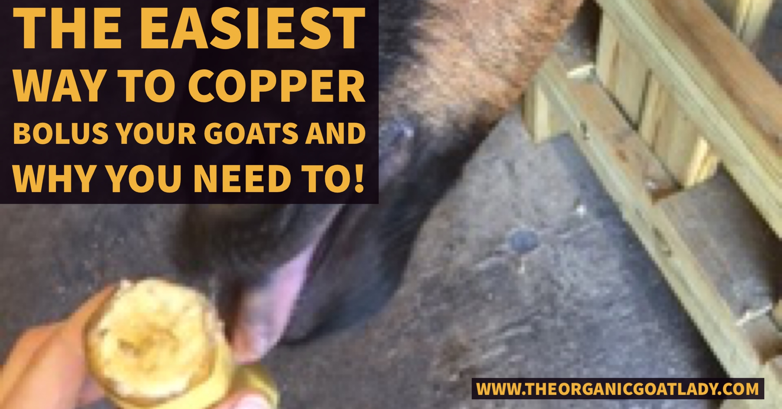 The Easiest Way To Copper Bolus Your Goats And Why You Need To