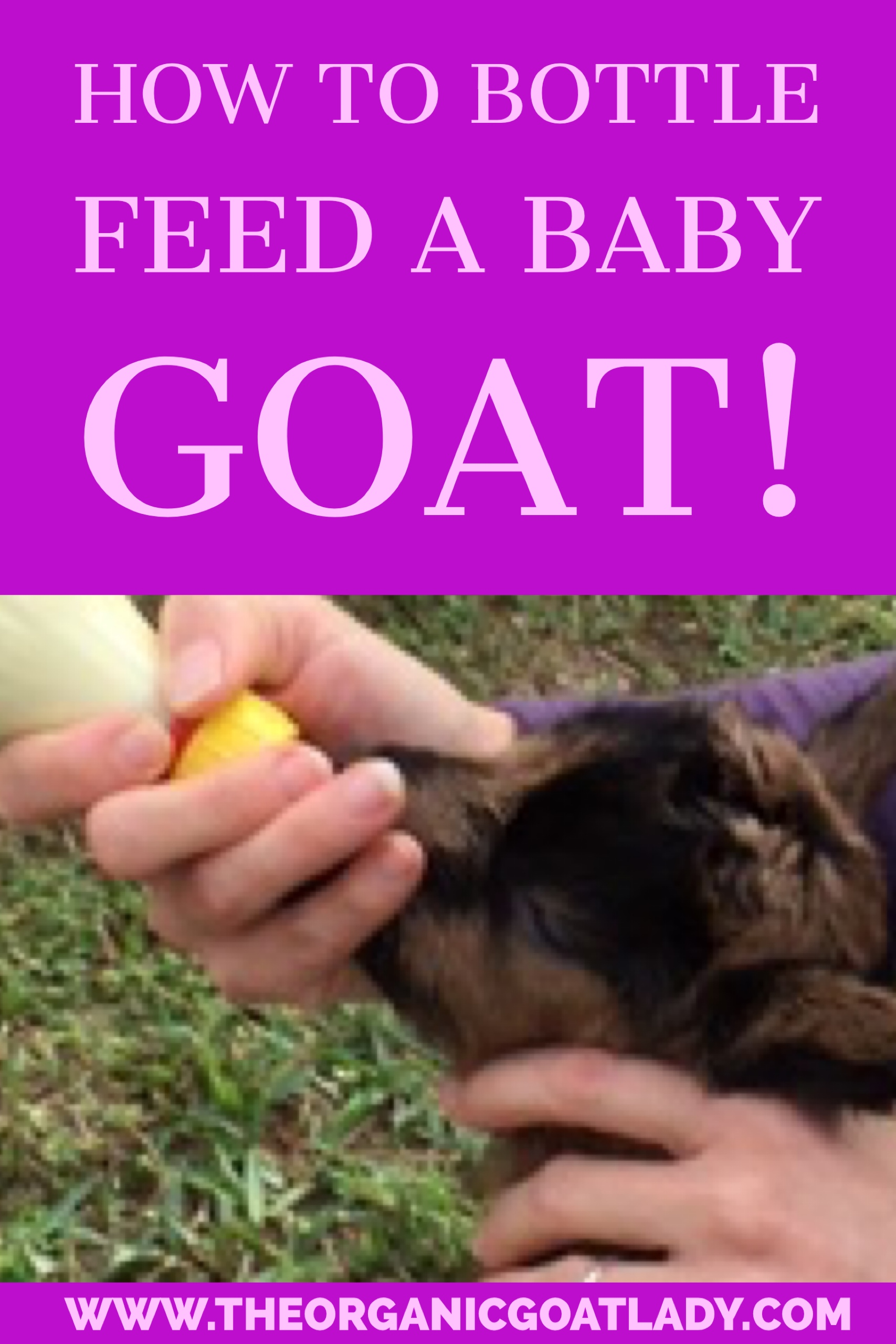 How To Bottlefeed A Baby Goat!
