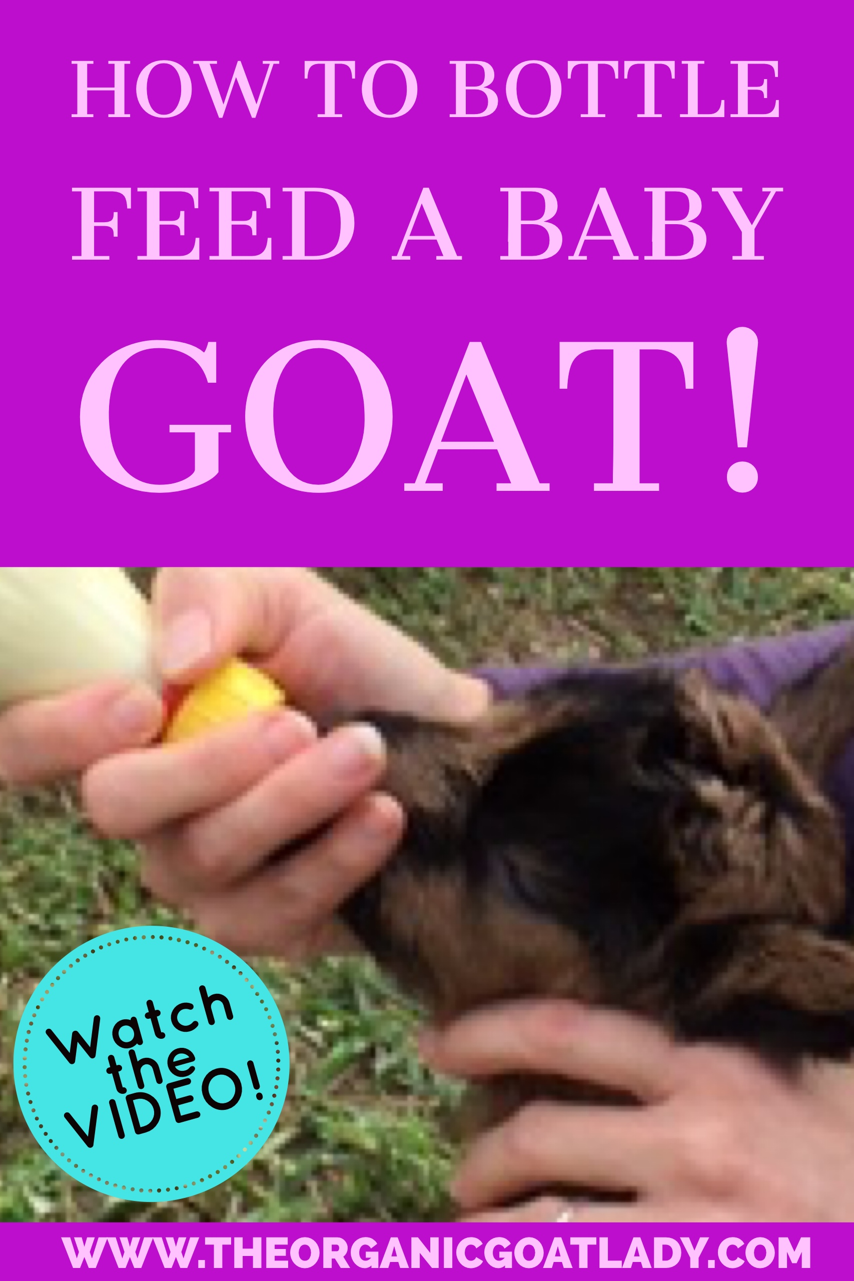 VIDEO-How To Bottle-Feed Your Newborn Goat!