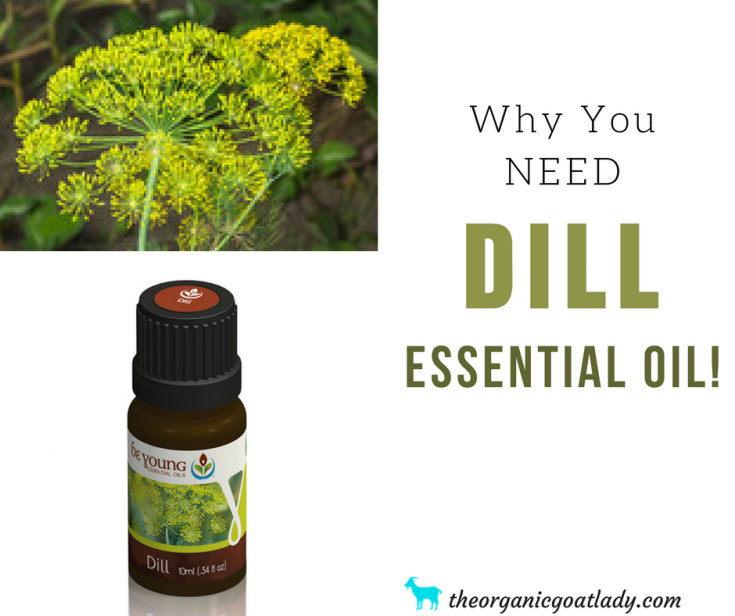 Why You Should Use Dill Essential Oil!
