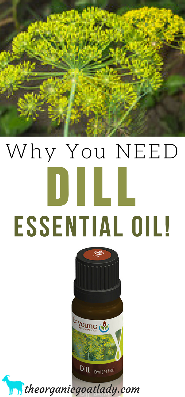 Why You NEED Dill Essential Oil!