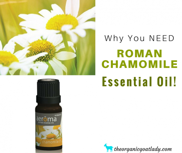 Why You Should Use Roman Chamomile Essential Oil!