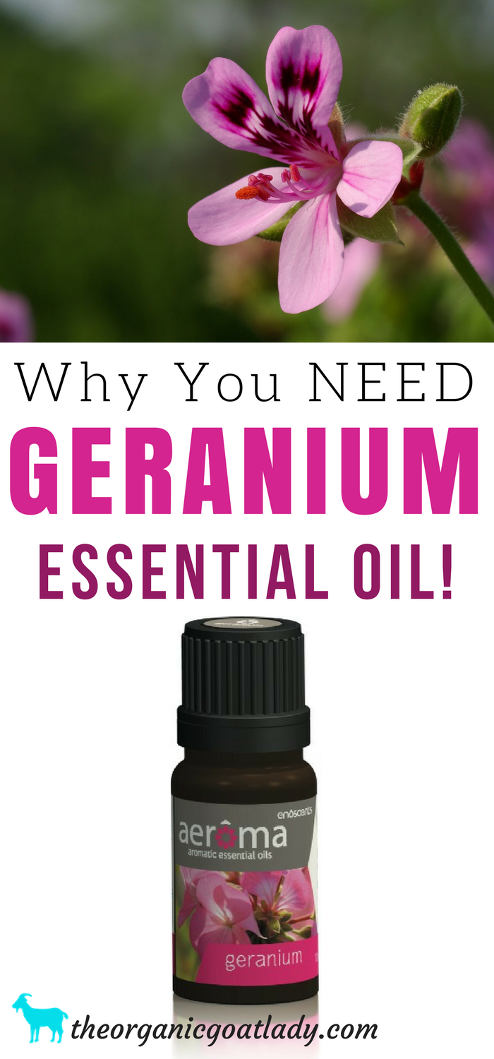 Why You NEED Geranium Essential Oil