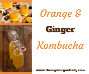 Orange and Ginger Kombucha