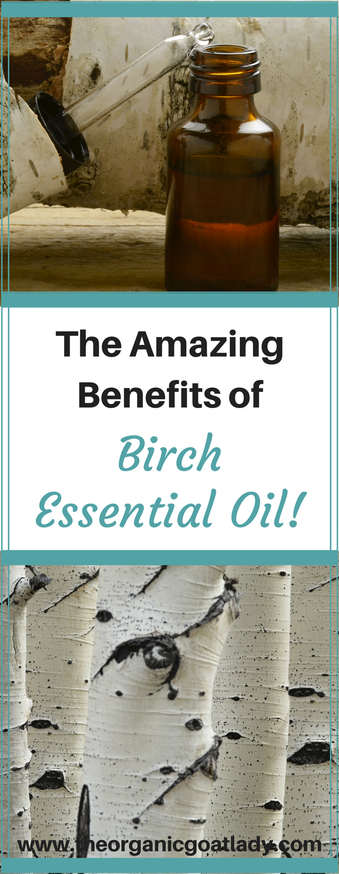 The Amazing Benefits of Birch Essential Oil!