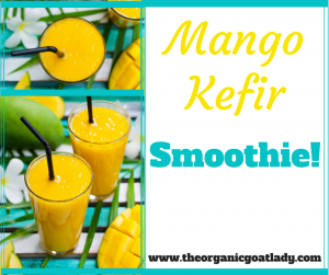 Mango Kefir Smoothie!