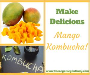 Mango Kombucha Recipe!