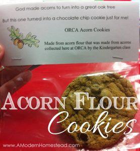 Acorn Flour Chocolate Chip Cookies!