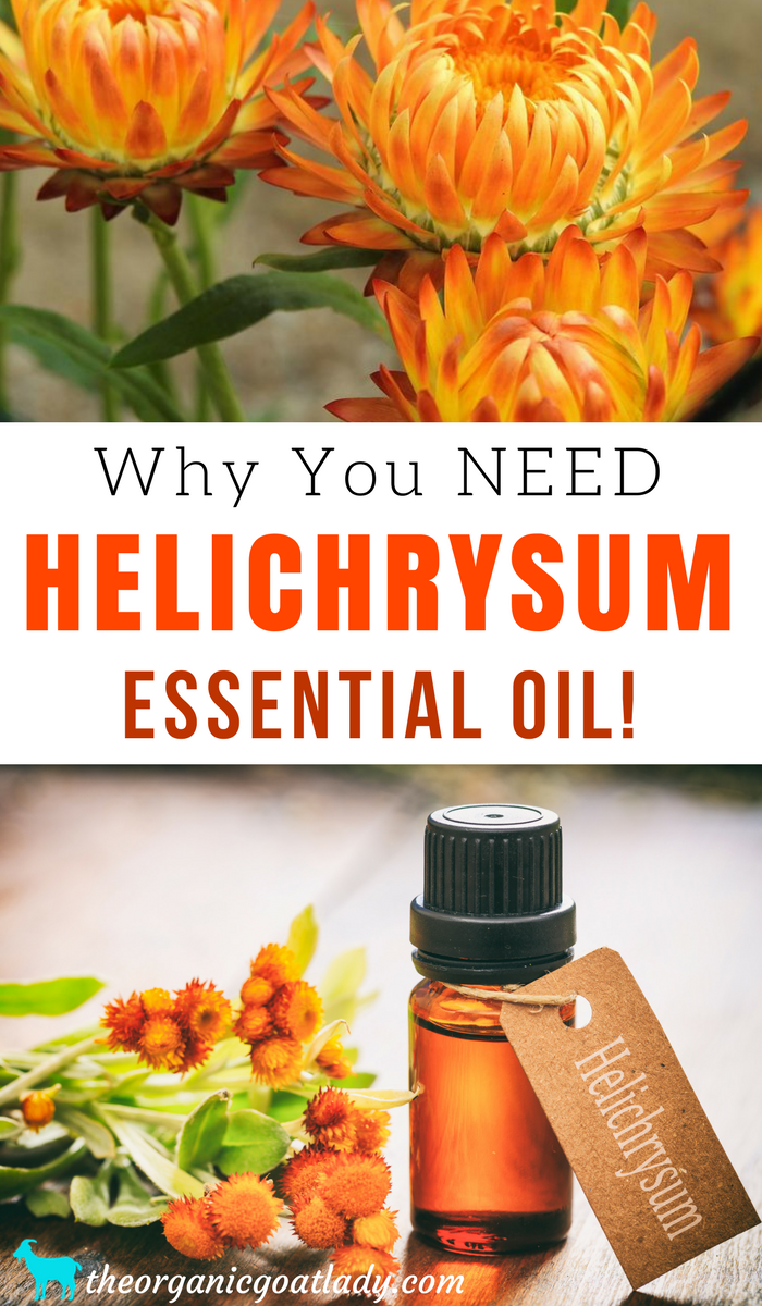 Why You Need Helichrysum Essential Oil