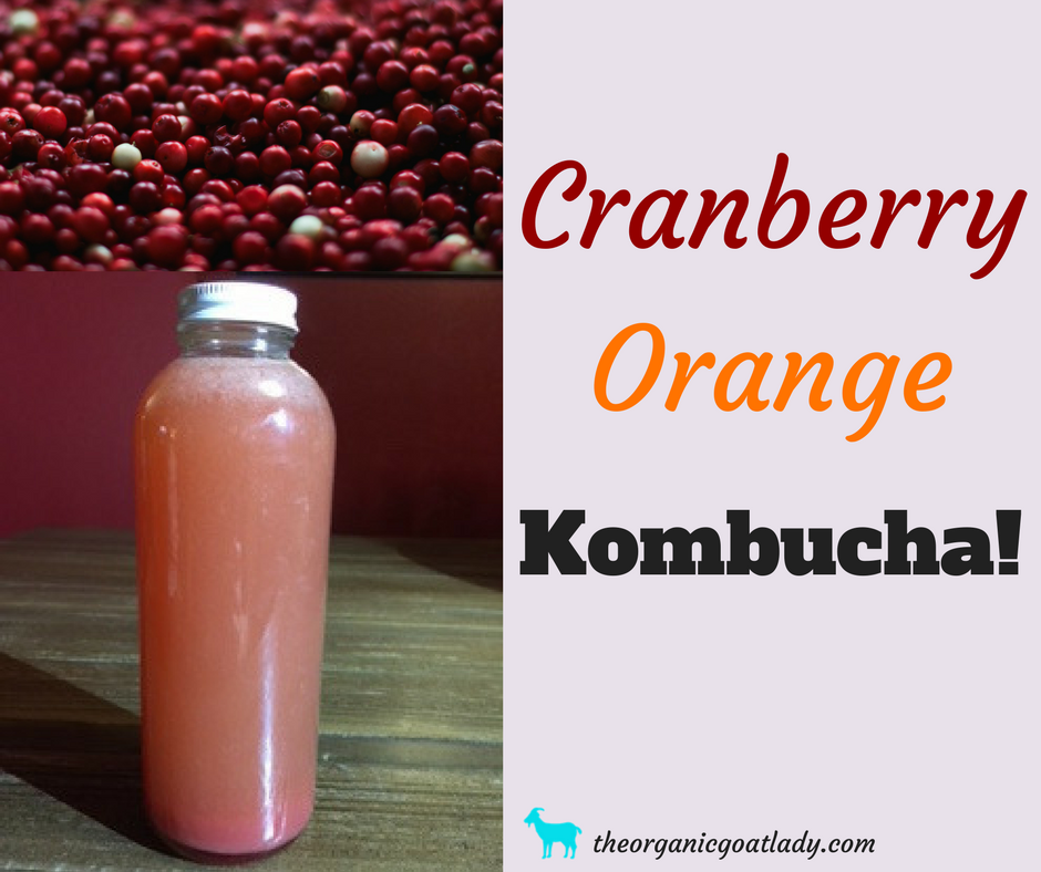 Orange Cranberry Kombucha Recipe!