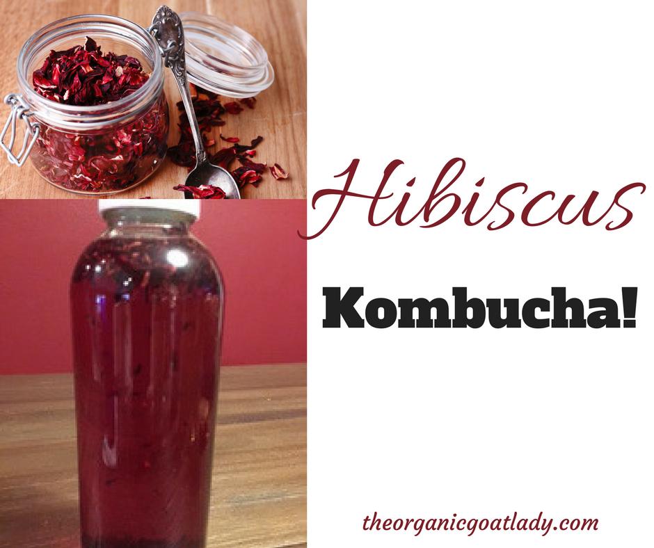 Hibiscus Kombucha Recipe!