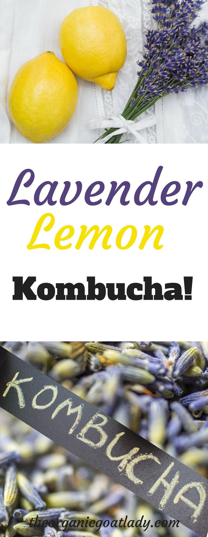 Lavender Lemon Kombucha!
