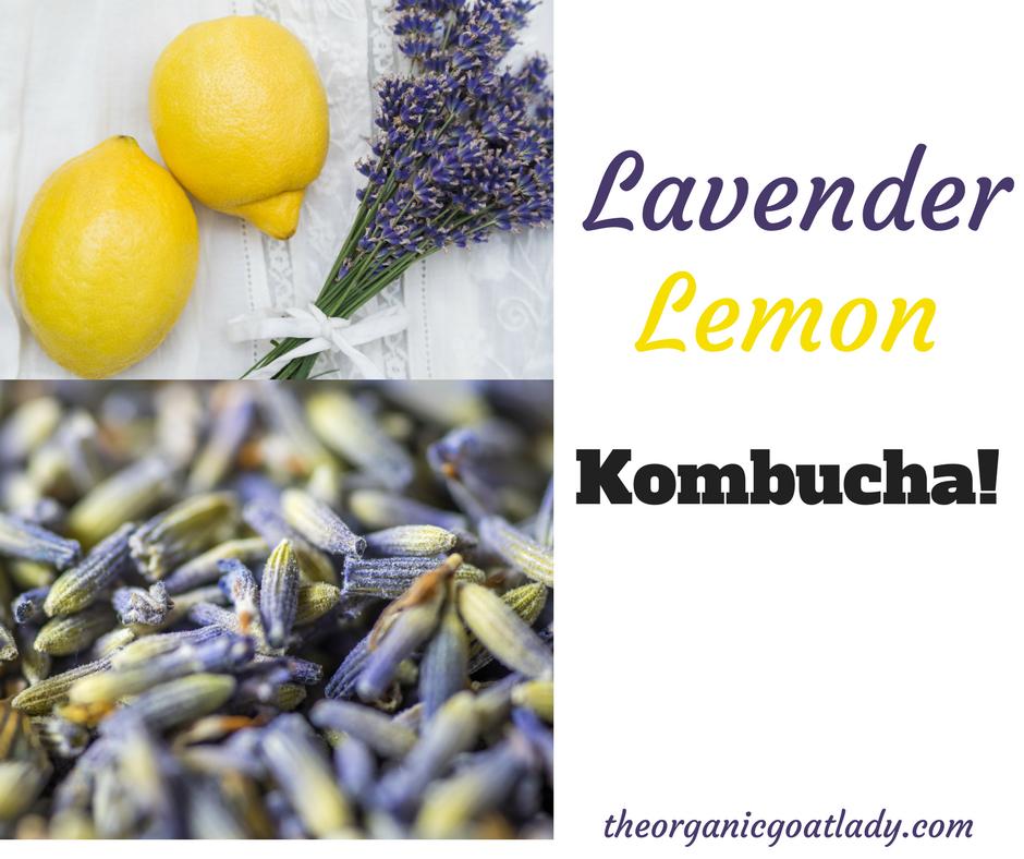 Lemon Lavender Kombucha Recipe!