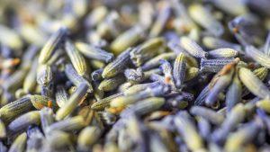 Lavender Lemon Kombucha