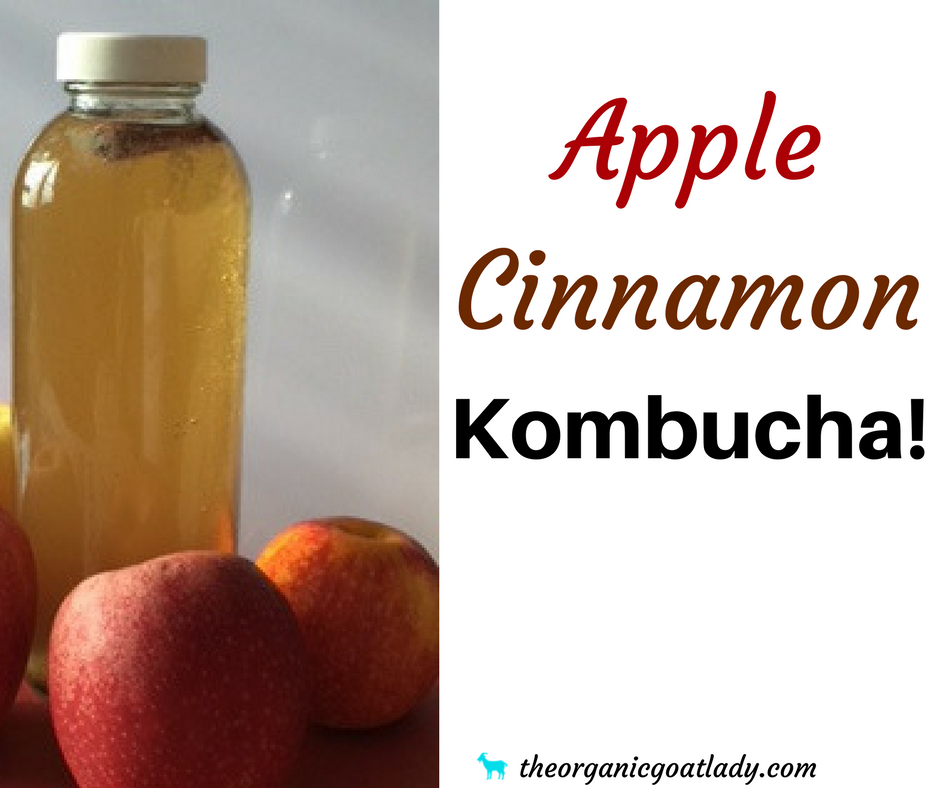 Apple Cinnamon Kombucha Recipe!