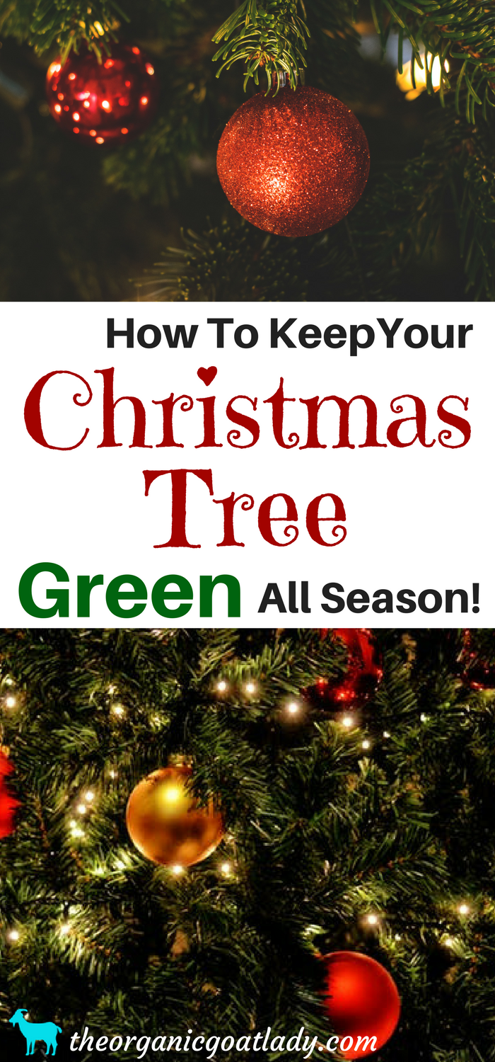 how to make a christmas tree last longer