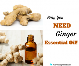 Why You NEED Ginger Essential Oil!