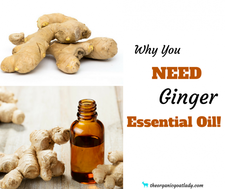 Why You Should Use Ginger Essential Oil!