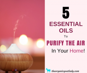 5 Essential Oils To Purify The Air In Your Home!