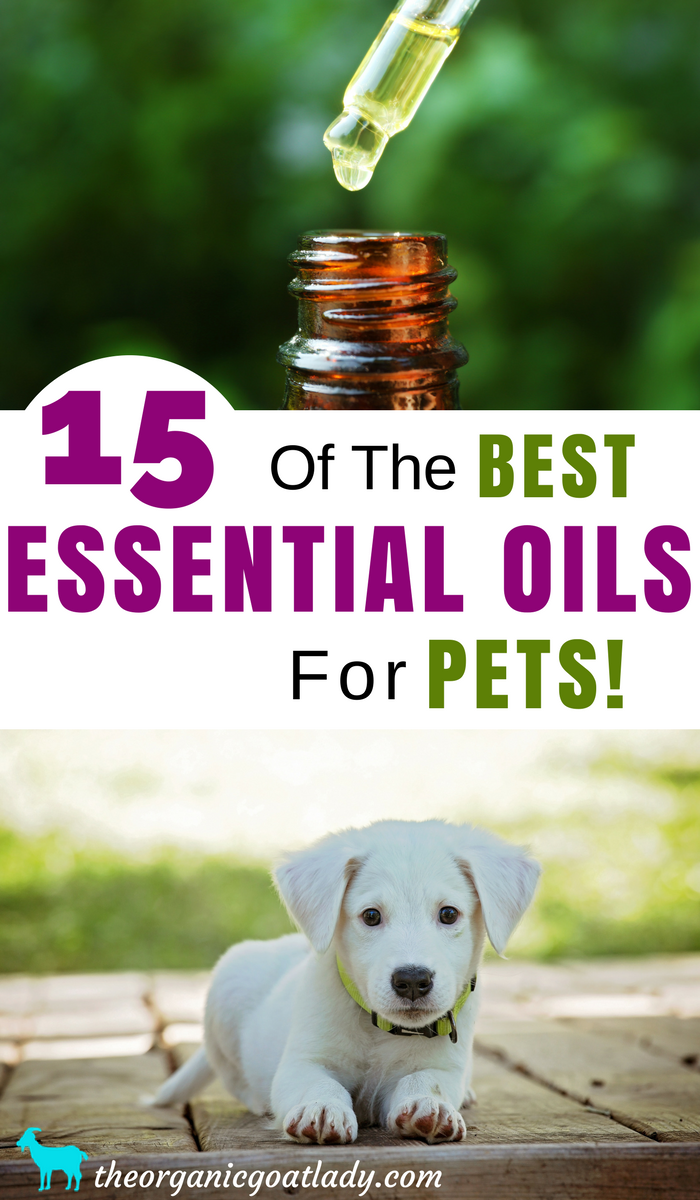 15 Of The Best Essential Oils For Pets
