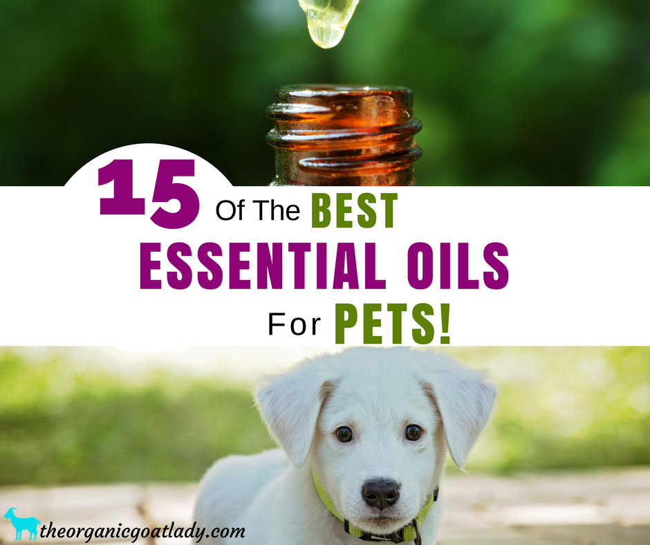 15 Essential Oils For Pets!