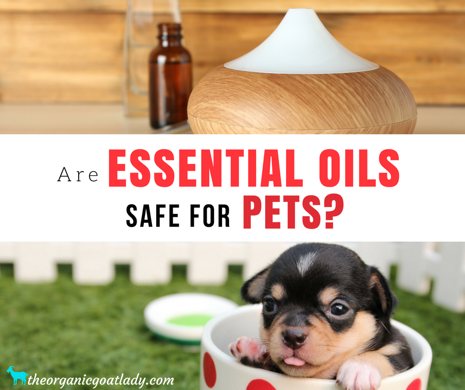 Are Essential Oils Safe For Pets The Organic Goat Lady
