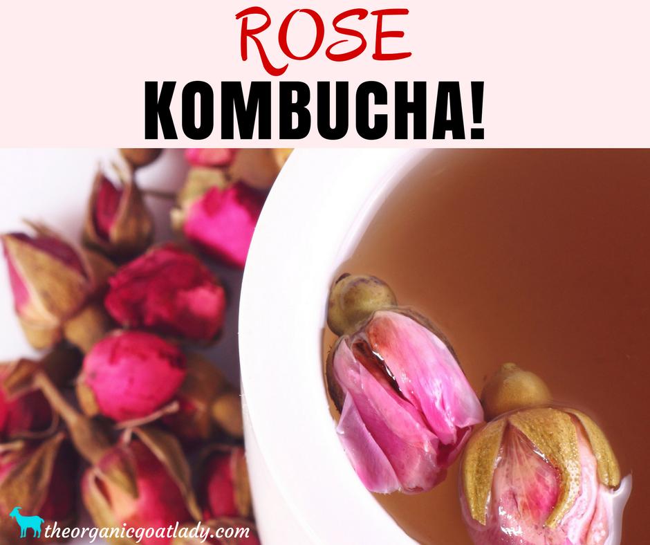 Rose Kombucha!