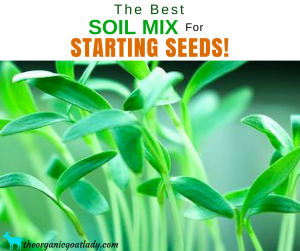 The Best Soil Mix For Starting Seeds