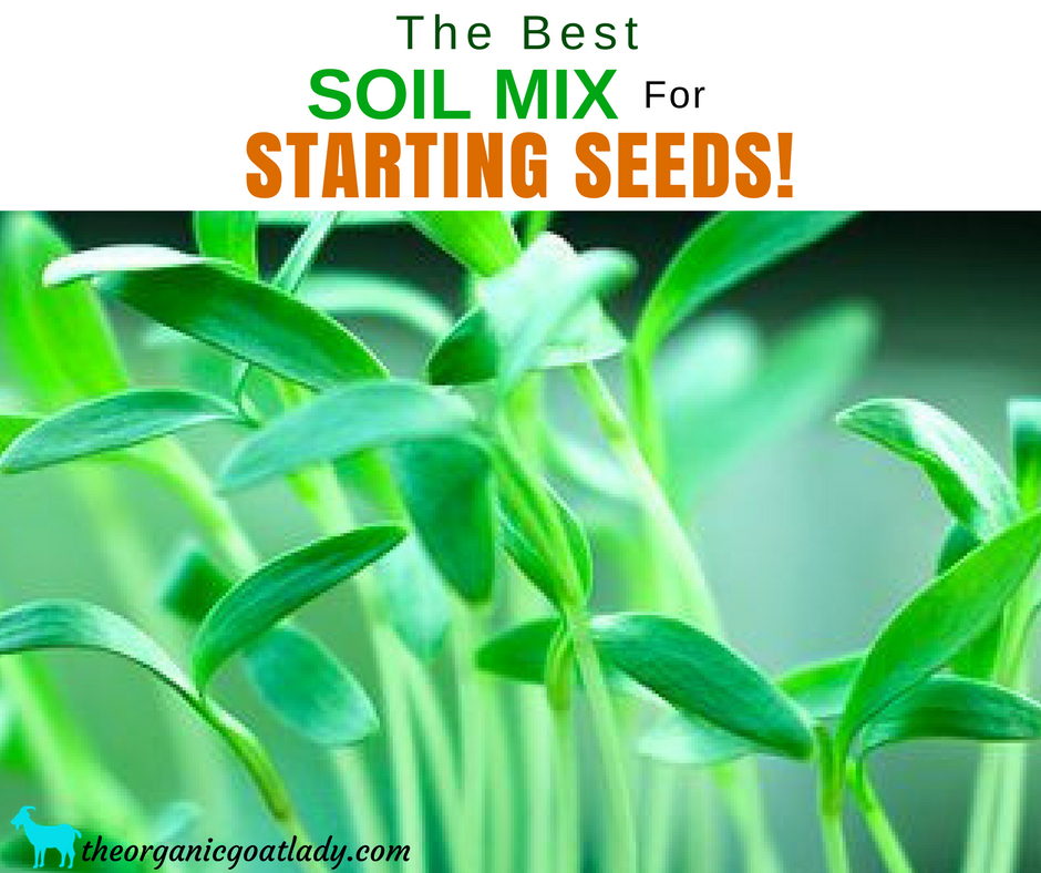 The Best Seed Starting Mix