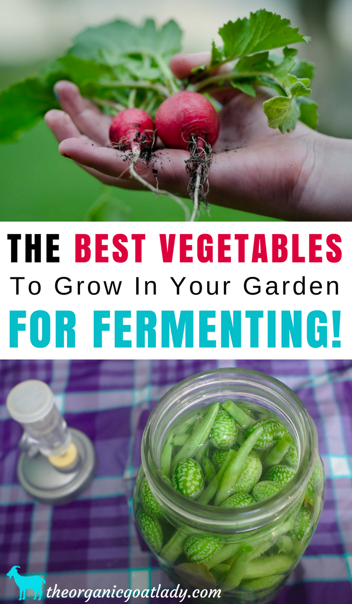 The Best Vegetables To Grow In Your Garden For Fermenting