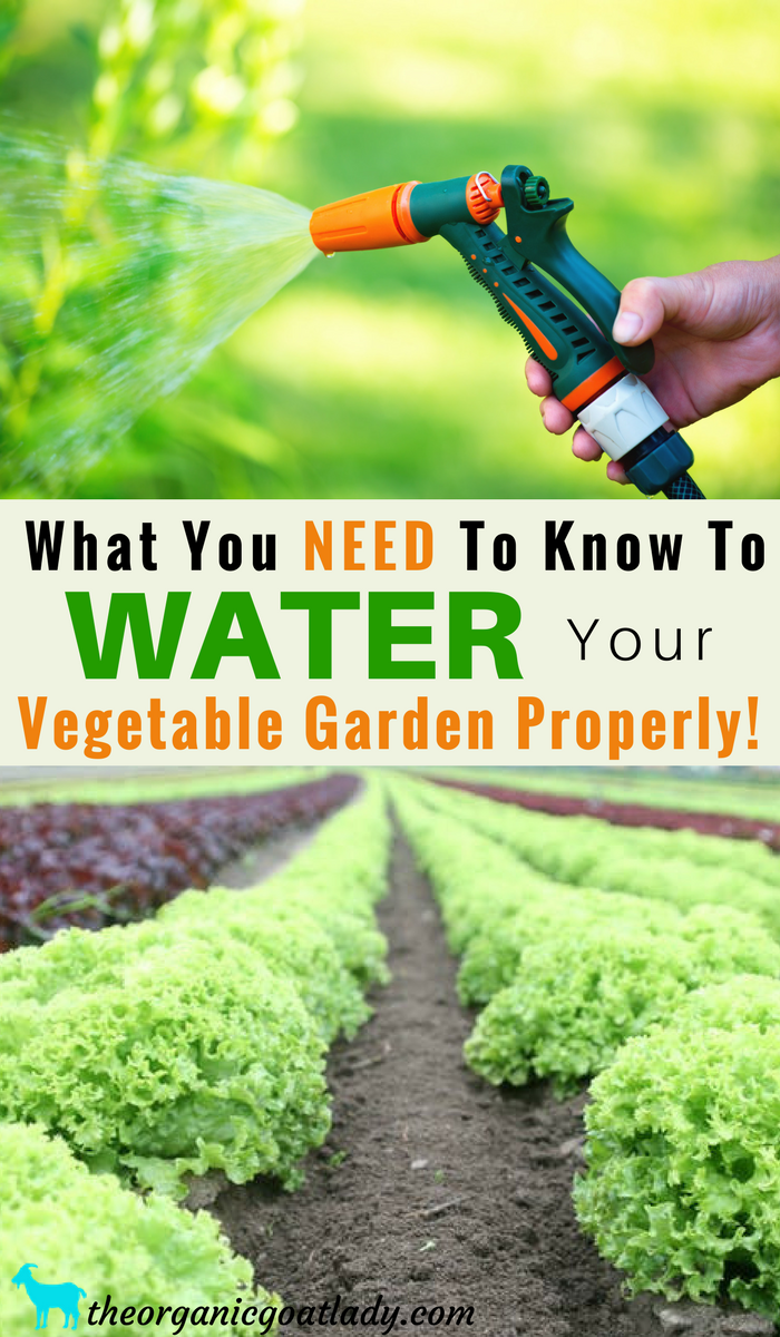 What You NEED To Know To Water Your Vegetable Garden Properly
