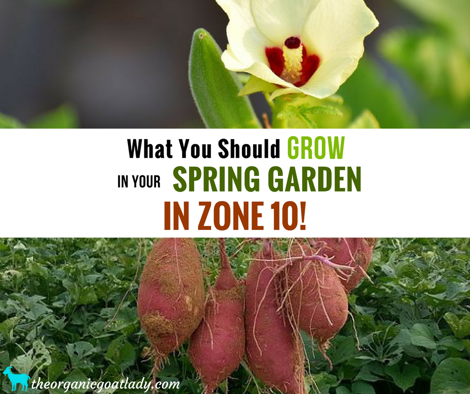 Zone 10 Plants To Grow In Your Spring Garden