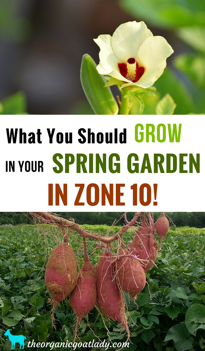 What You Should Grow In Your Spring Garden In Zone 10