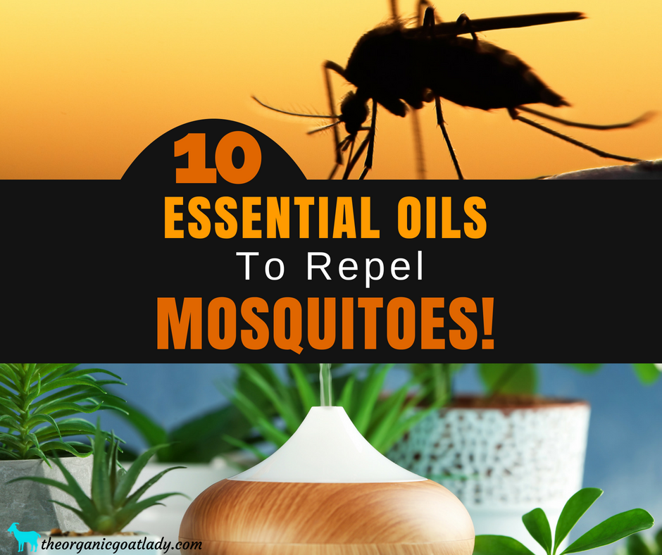 10 of the Best Essential Oils For Mosquitoes!