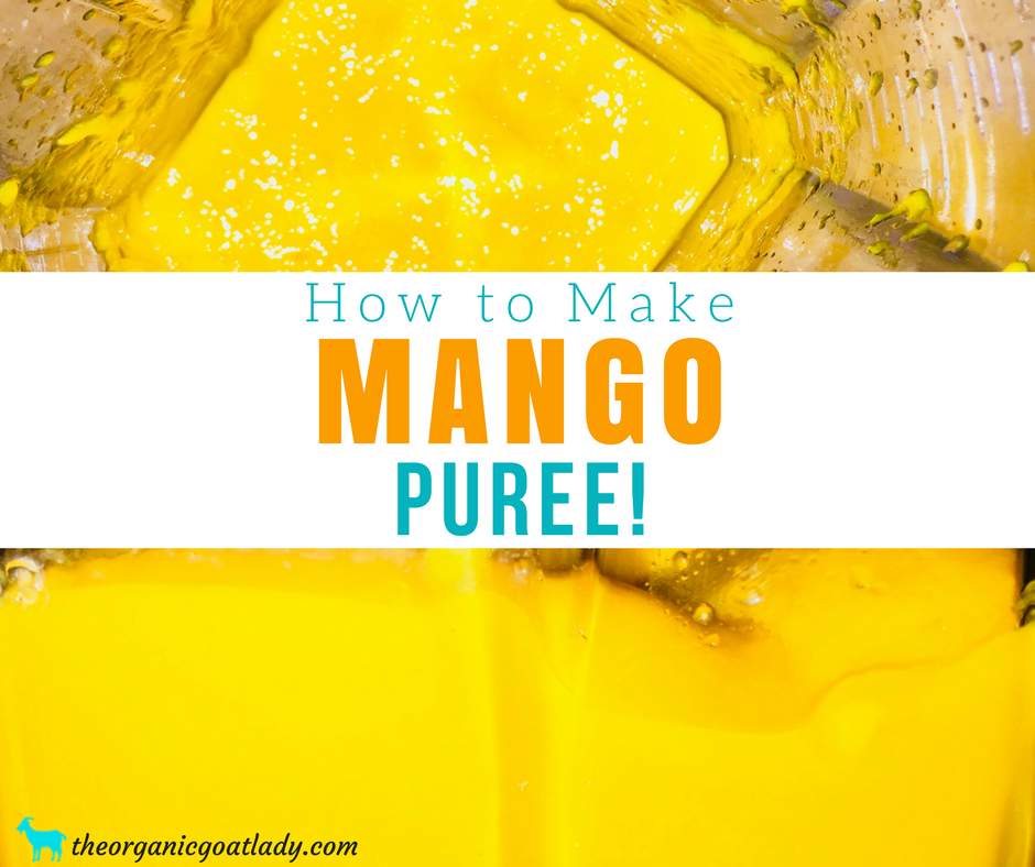 Mango Puree Recipe!