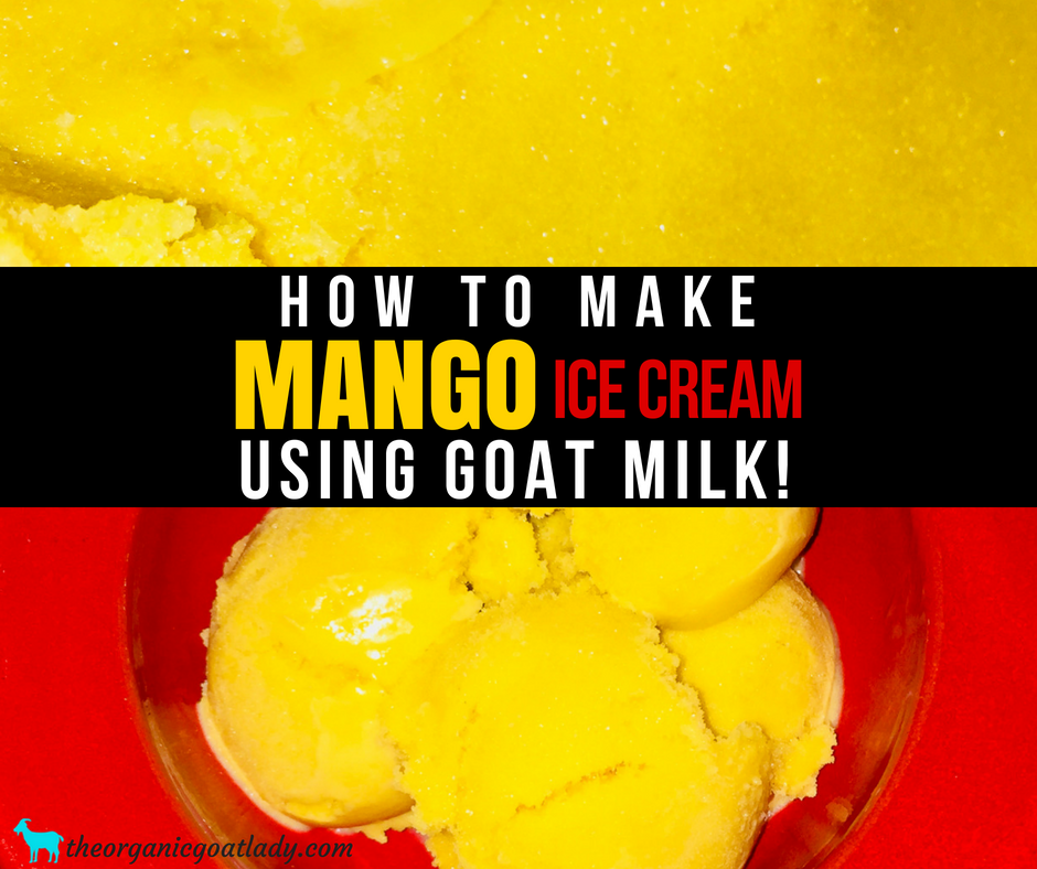 Mango Ice Cream Made With Goat Milk!