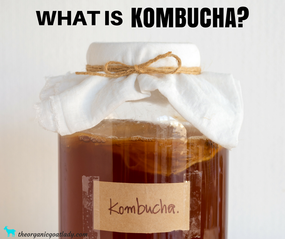 What Is Kombucha?