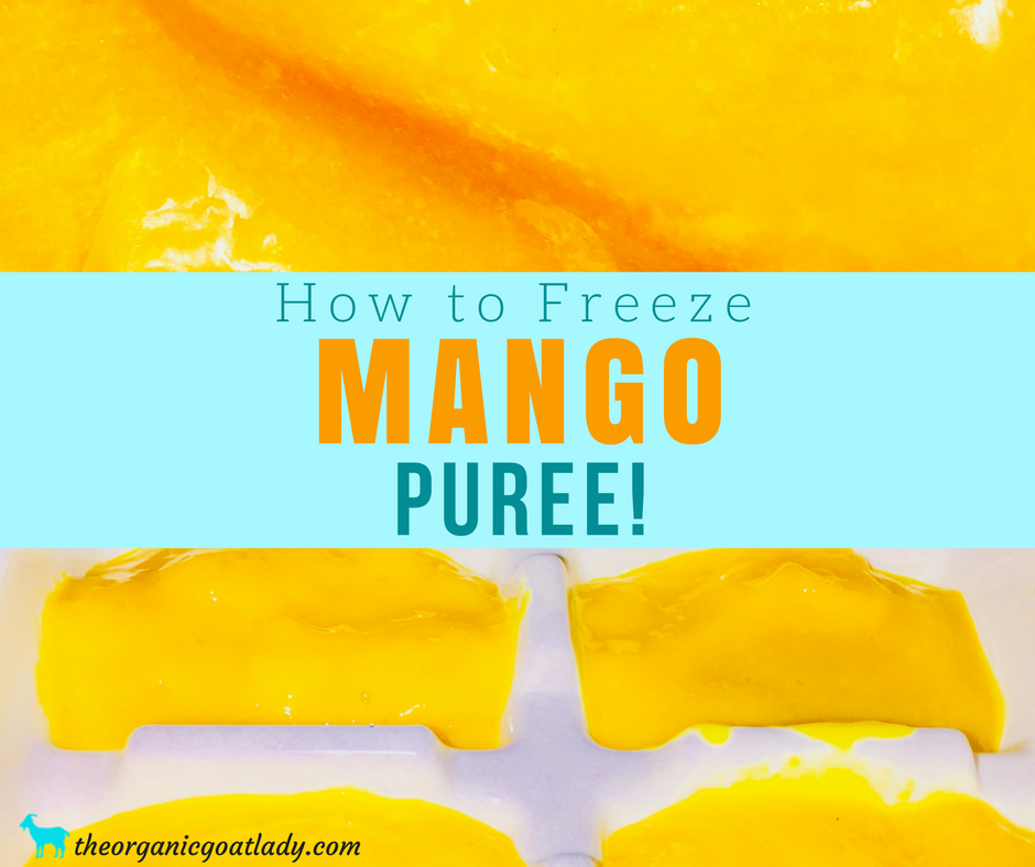 Freezing Mango Puree!