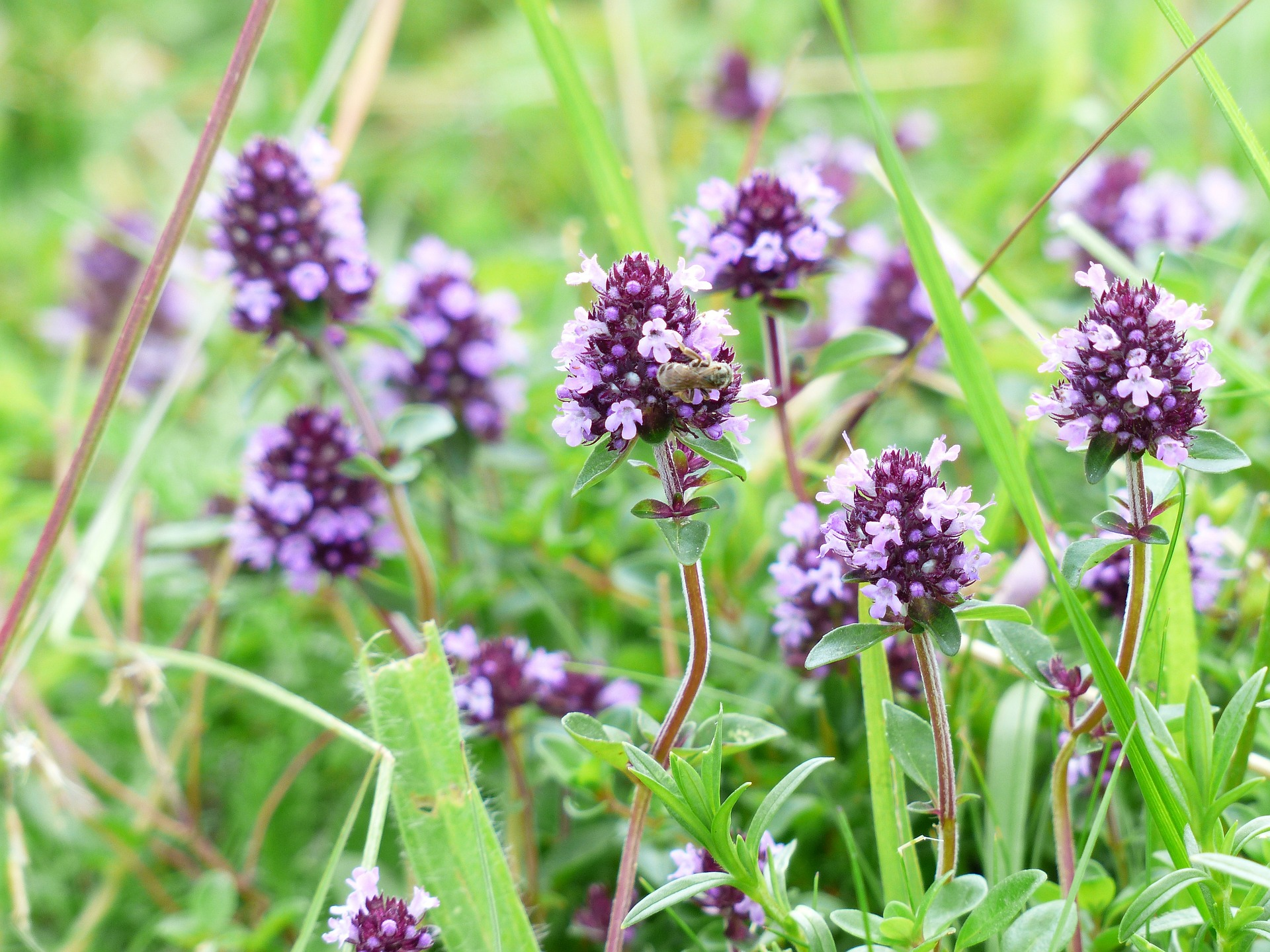 13 Plants That Repel Mosquitoes! - The Organic Goat Lady