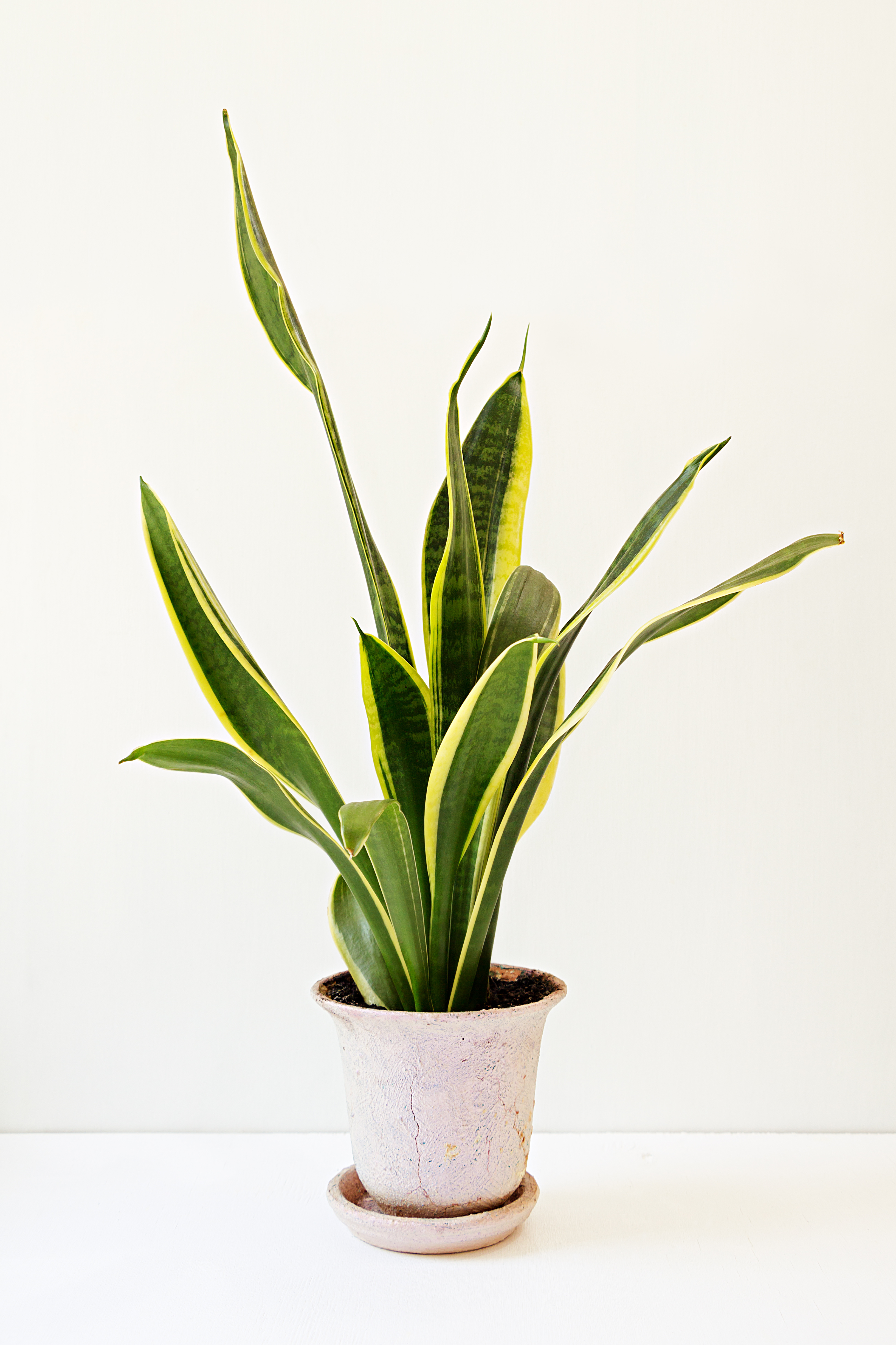 Air Purifying Plants For Bedroom: 25 Air Purifying Plants!