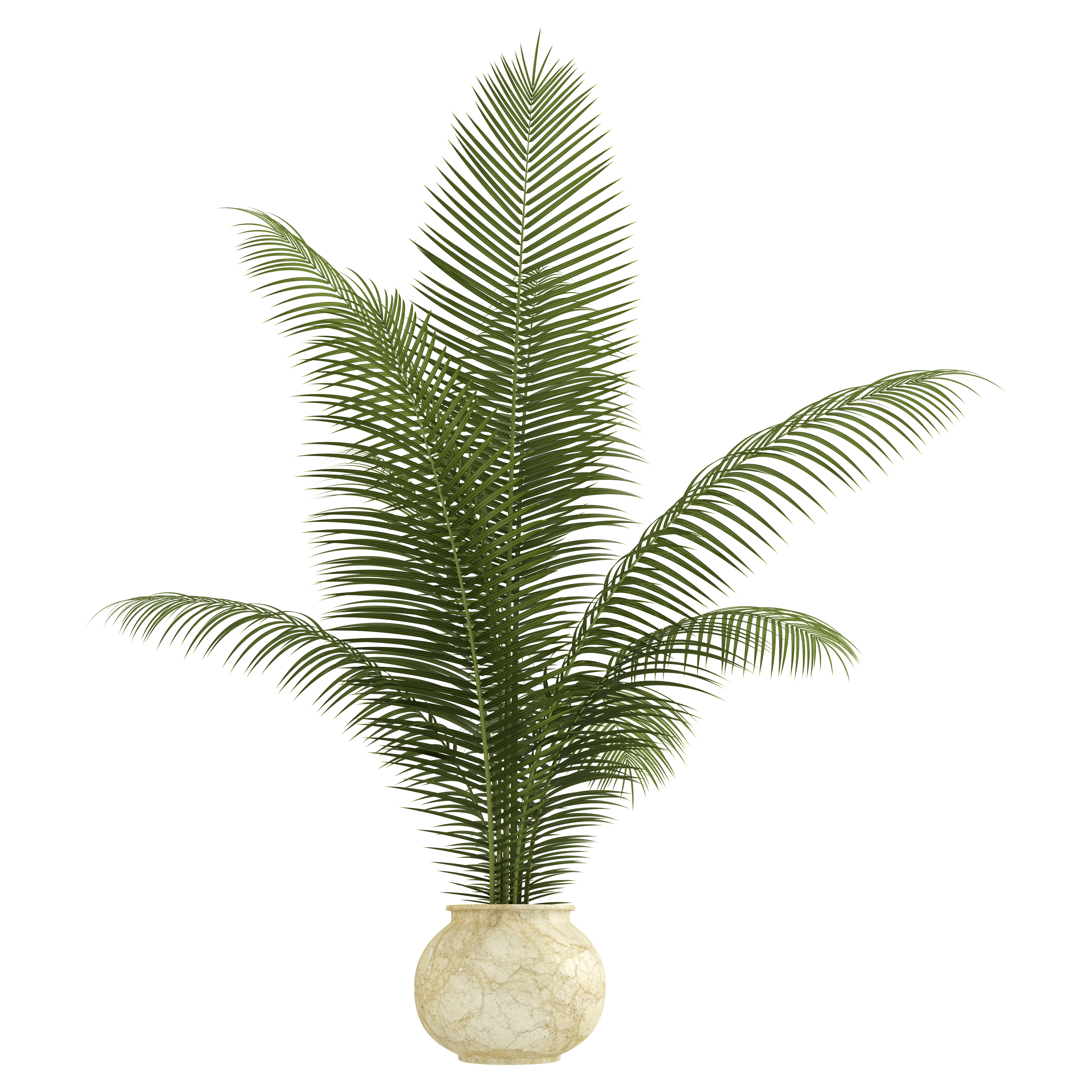 11 House Plants Safe For Cats and Dogs - The Organic Goat Lady