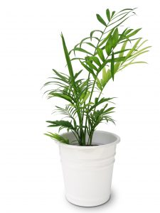 Air Purifying Plant
