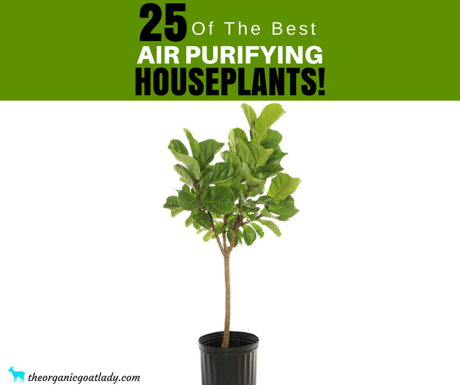25 Air Purifying Plants!