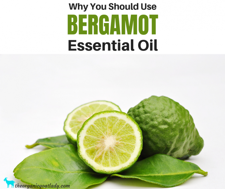 Why You Should Use Bergamot Essential Oil