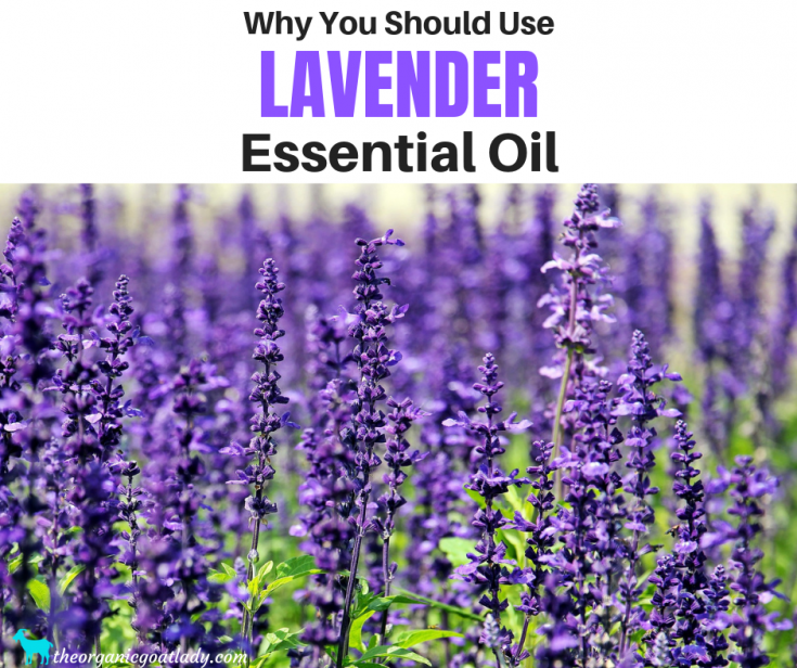 Why You Should Use Lavender Essential Oil