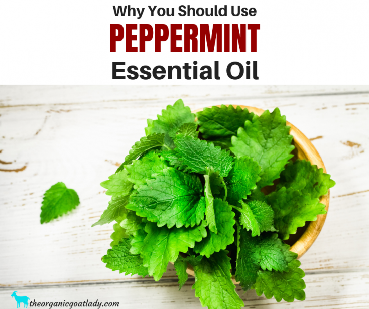 Why You Should Use Peppermint Essential Oil