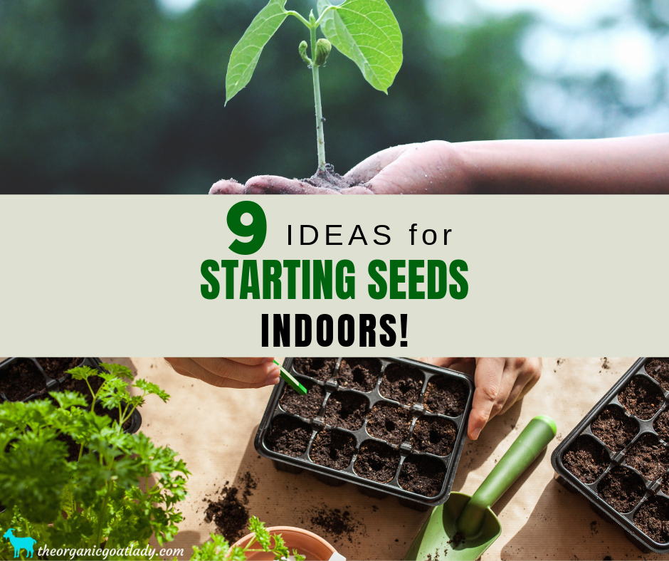 9 Ideas for Starting Seeds Indoors!