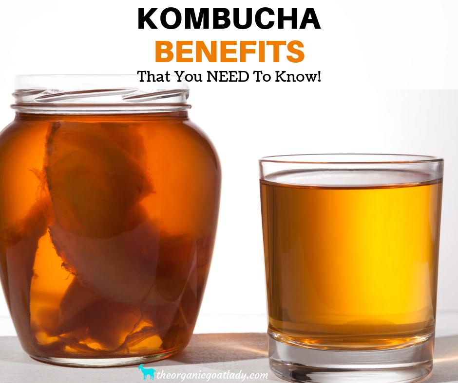 Kombucha Benefits That You NEED To Know!