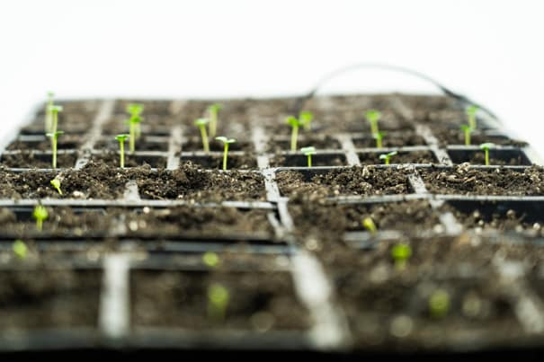 How to Use a Heat Mat and Thermometer for Seed Germination
